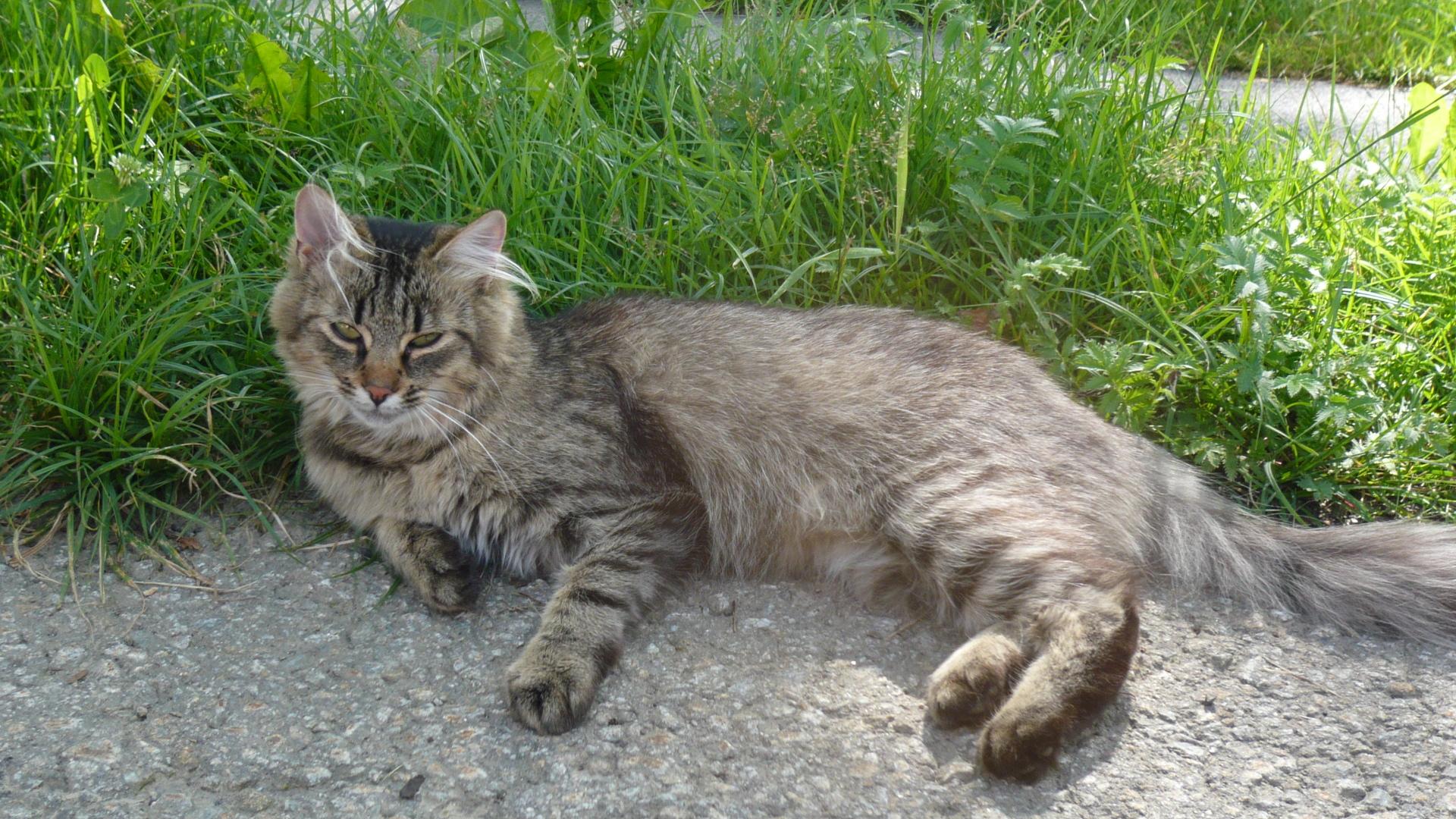 Katzen 8