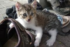Katzen 6