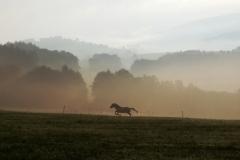 Sonnenaufgang mit Nebel 2