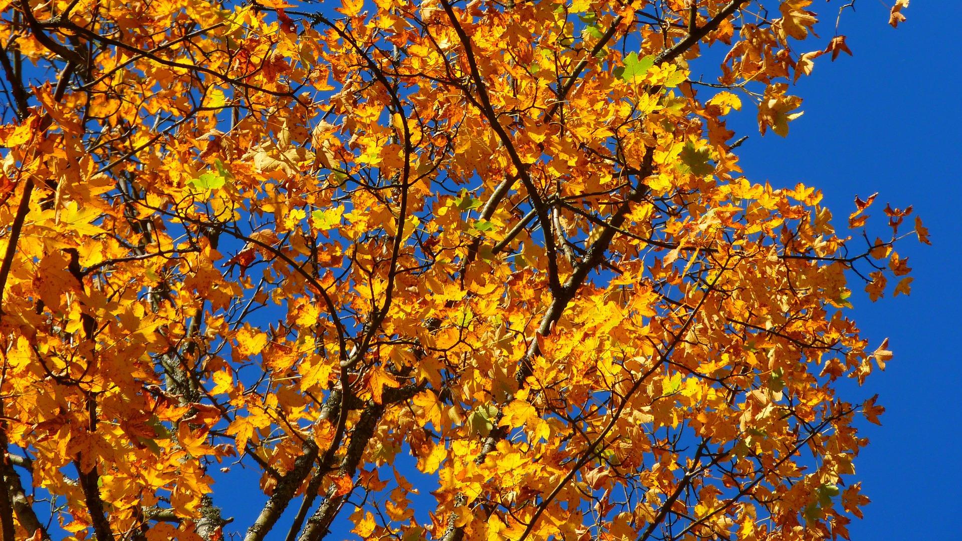 Wanderbare Herbsttage